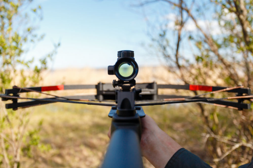 Best Bow Sights to Help You Achieve the Perfect Shot