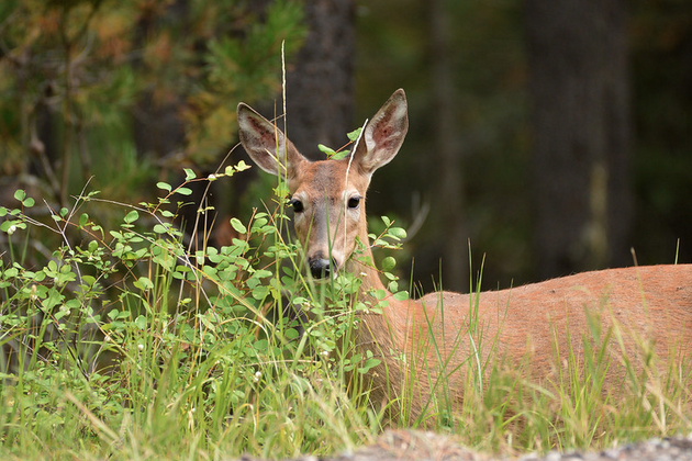 stalking deer with a crossbow